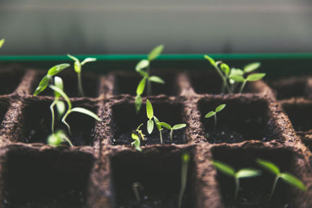 5 Easy Ways To Grow A Local Business