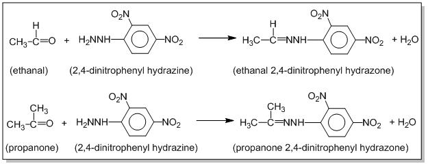 2,4 – DNP test