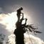 Melnik Tree Service & Landscape's profile picture