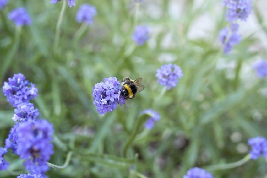 bijen en bloemen