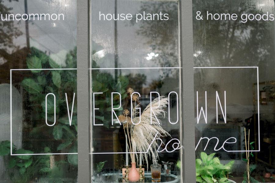Overgrown Home Plant Shop in Denver Highlands