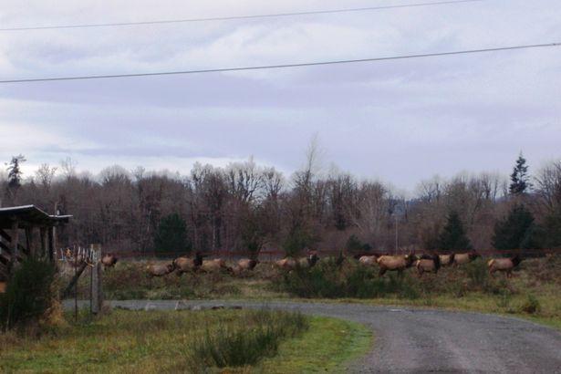 170 River Ranch Rd