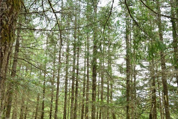 115 Elk Trail Lane