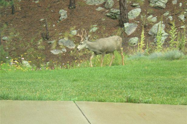 4900 Elk Run