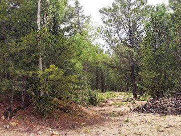 Hayden Road, Cripple Creek, CO, 80813,