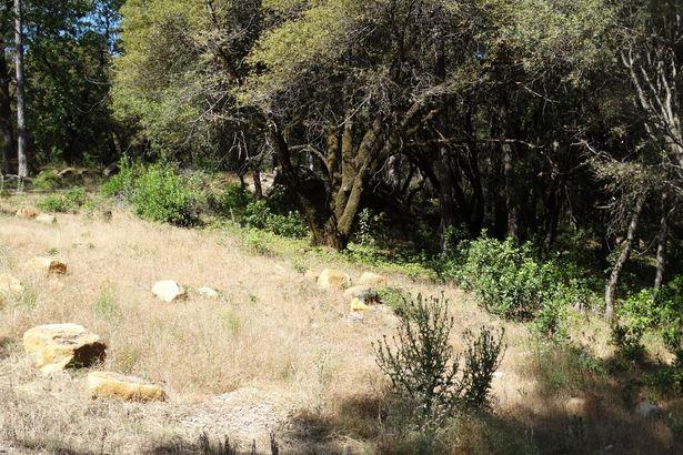 0 Bear Canyon Court
