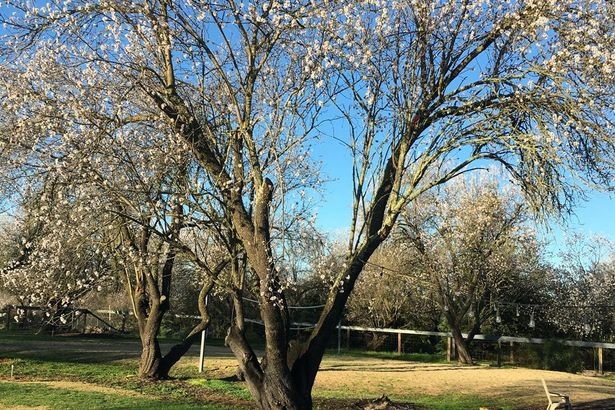 3275 Almond Blossom Lane