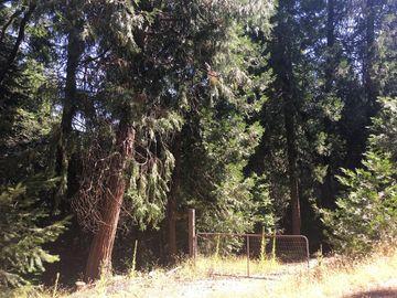 4681 GLENWOOD Drive, Camino, CA, 95709,