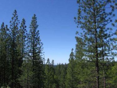 0 Forest Service Road, Somerset, CA, 95684,