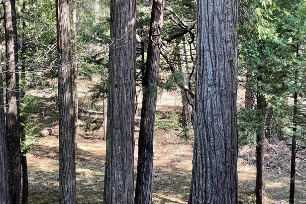 3005 Amber Trail