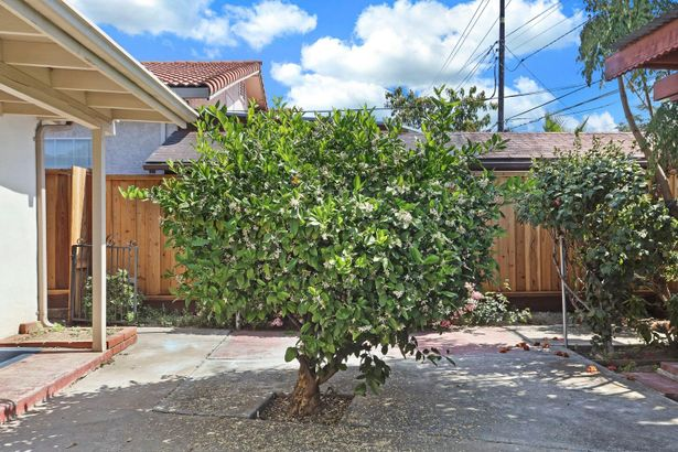 3350 Pepper Tree Lane