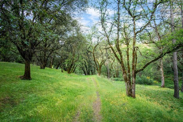 360 Pinewood Way