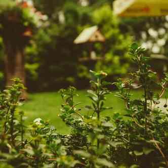 Green plants in a backyard