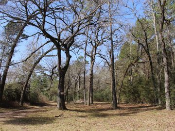 205 Ac Forest Service 219 Road, Richards, TX, 77830,
