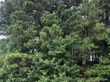 0 Forest Trace Road, Richards, TX, 77873,