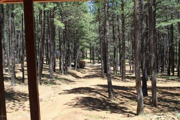 2397 TURKEY Trail