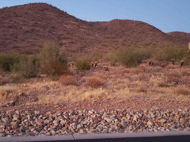 11532 E DREYFUS Avenue #16, Scottsdale, AZ, 85259,