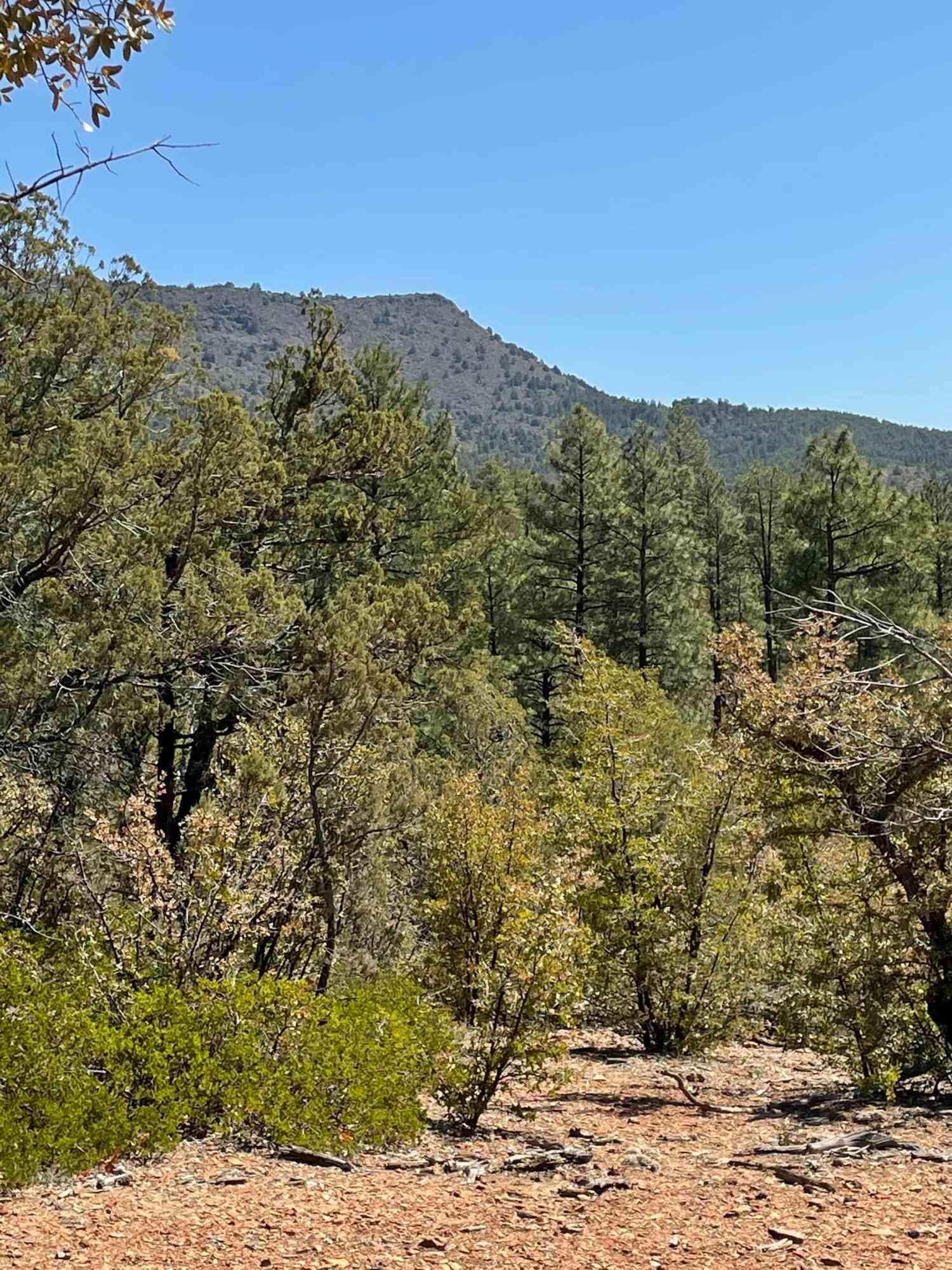 0000 Fawn Drive #1D, Pine, AZ, 85544,