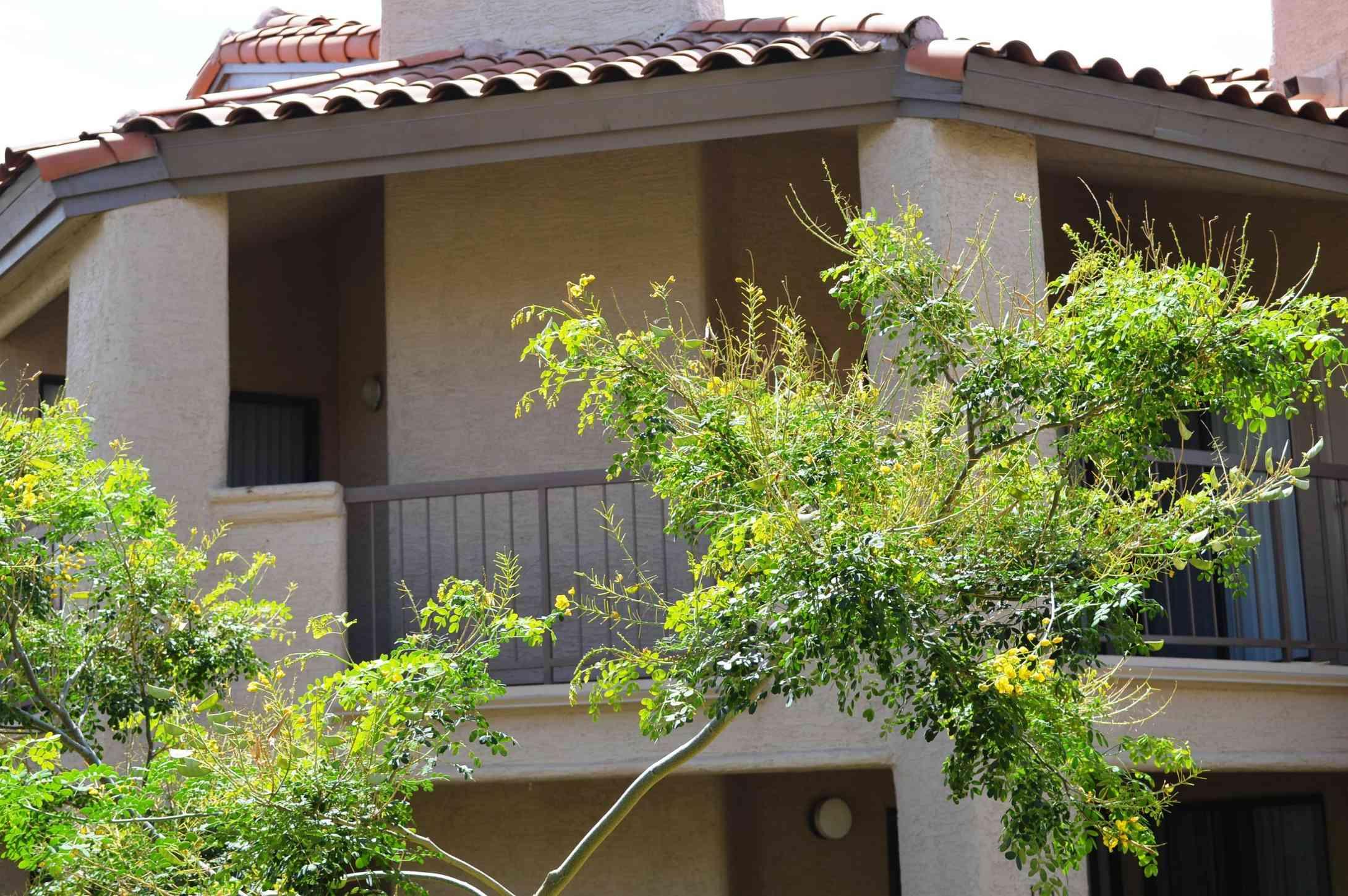 9445 N 94TH Place #215, Scottsdale, AZ, 85258,