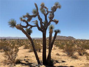 108 Foxy Flats Road, Joshua Tree, CA, 92252,