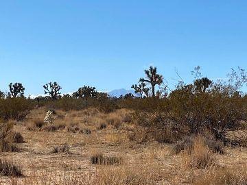 8757 Desert Willow, Morongo Valley, CA, 92256,