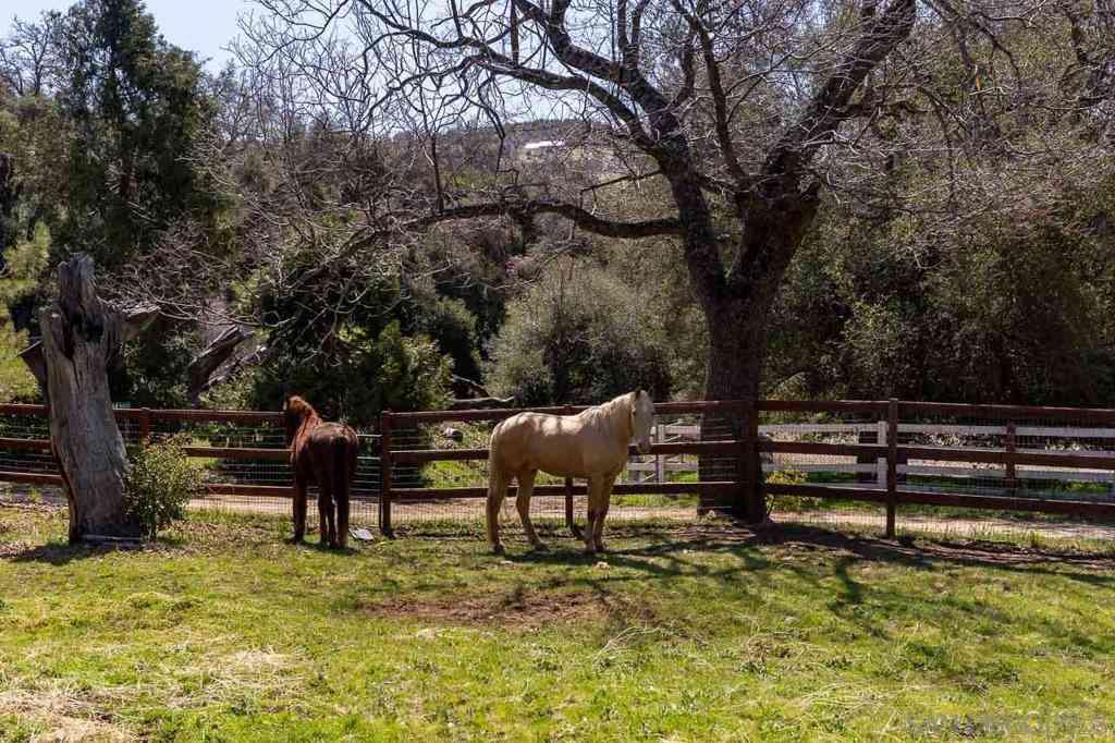 5867 Forest Meadow Rd, Julian, CA, 92036,