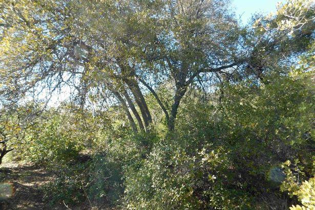 1 Pine Hills Rd