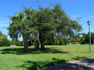 None S POINTE ALEXIS DR, Tarpon Springs, FL, 34689,