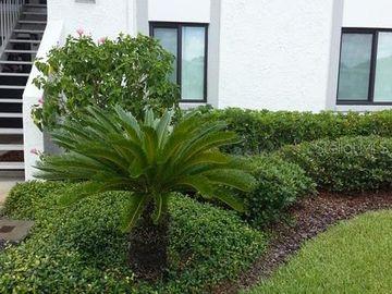 291 CYPRESS LANE #2, Oldsmar, FL, 34677,