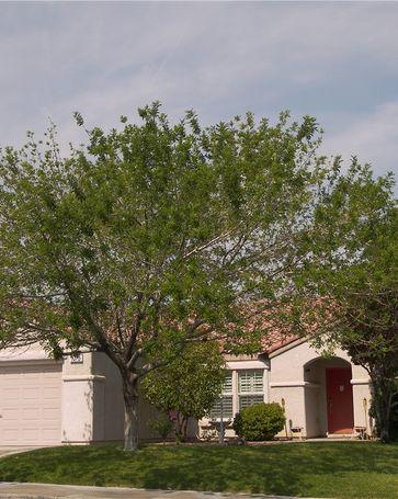 1075 Silver Star Street Henderson, NV, 89002