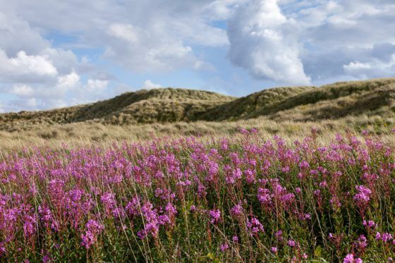 Dune Flowers Photography Print