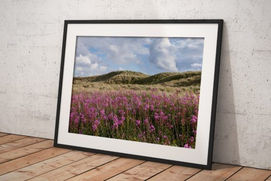 Dune Flowers Photography Print In Black Frame