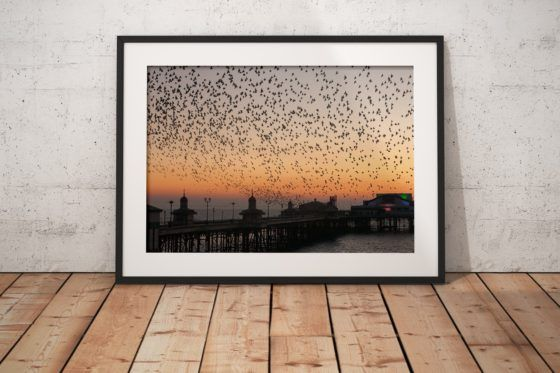 Blackpool North Pier Starlings Photography Print In Black Frame