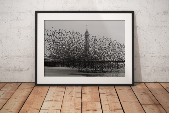 Murmuration of Starlings #1 Photography Print In Black Frame