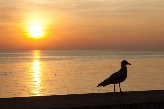 Seagull Silhouette Photography Print