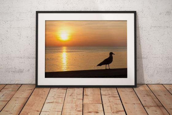 Seagull Silhouette Photography Print In Black Frame