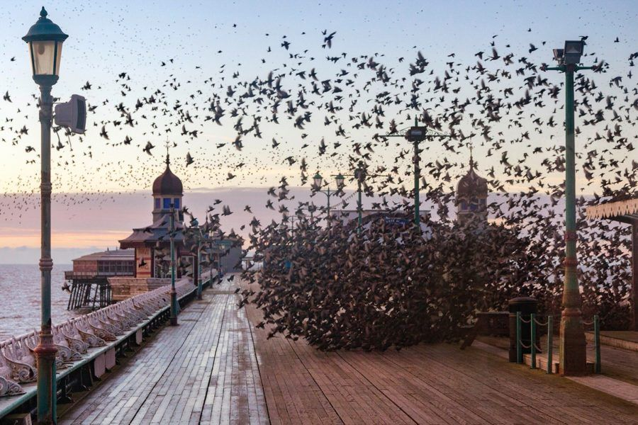 Murmuration of Starlings at Sunset by North Pier, Blackpool