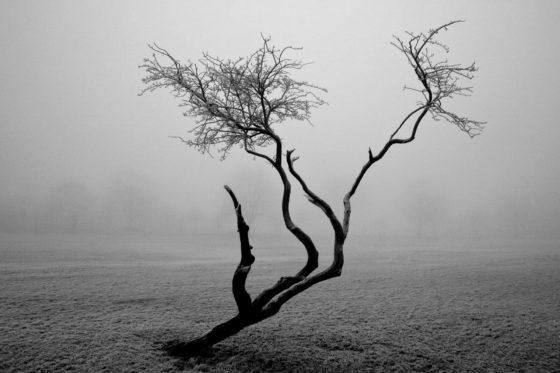 Frozen Tree Photography Print