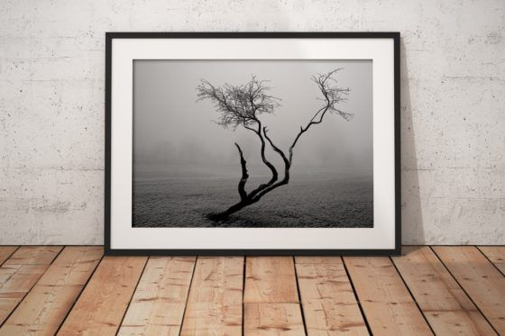 Frozen Tree Photography Print In Black Frame