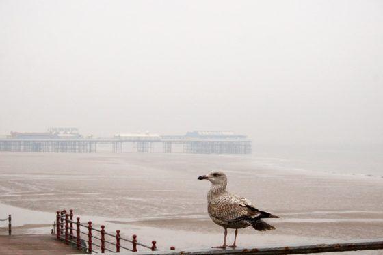 Blackpool Seagull Photography Print