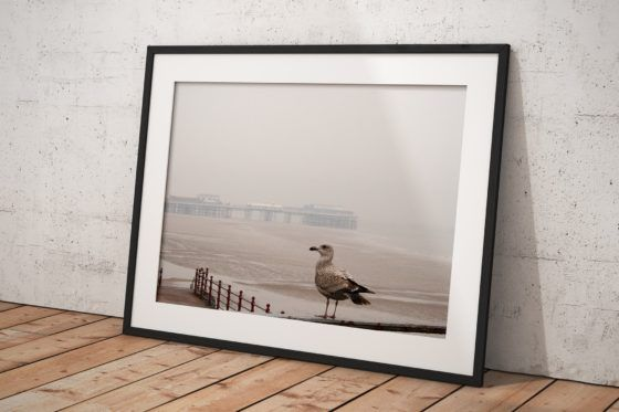 Blackpool Seagull Photography Print In Black Frame