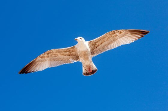 Fly Like A Seagull Photography Print