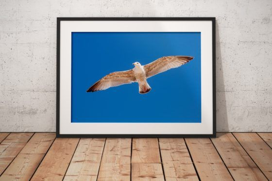 Fly Like A Seagull Photography Print In Black Frame