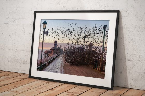 Blackpool Starlings Photography Print In Black Frame