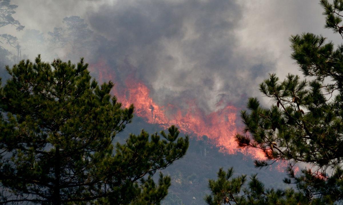 incendios forestales de 2021 superan a los de 2020