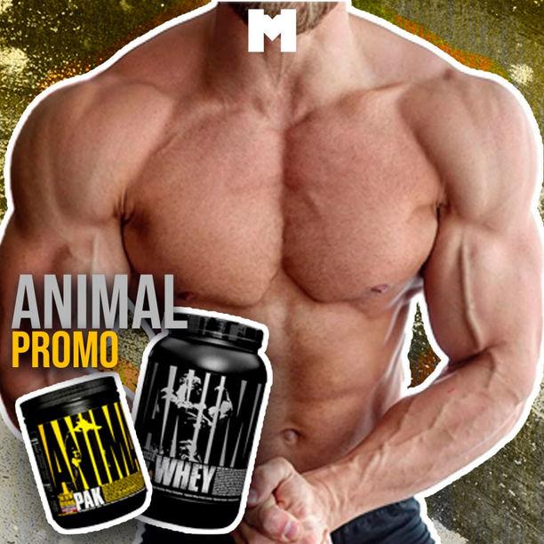 Animal promo