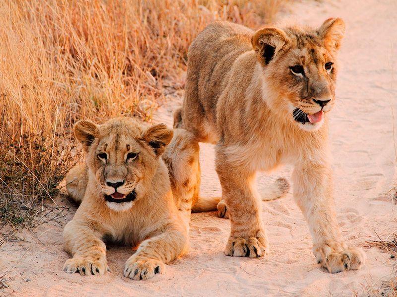 ekskursionnyy_tur_safari_tri_grani_afriki_puteshestvie_v_yuar_zimbabve_i_botsvanu__botsvana_zambiya_zimbabve_yuar