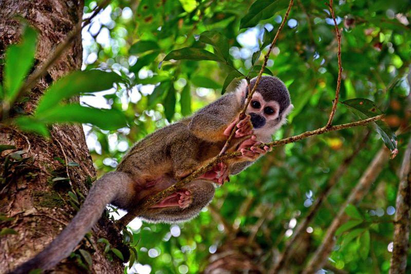 peru_ekvador_galapagosskie_ostrova_ekvador_i_peru