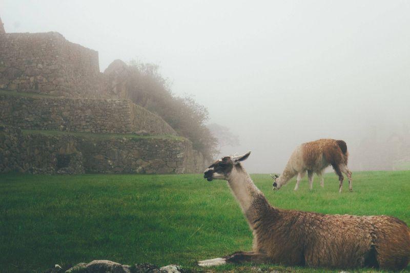 galapagosskie_ostrova_ekvador_i_peru_trekking_tur_ekskursionnyy_tur_ekspeditsiya