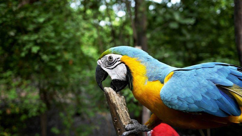 _galapagosskie_ostrova_ekvador_i_peru